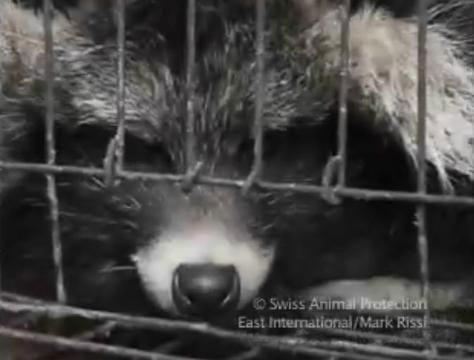 Olivia Munn mostra vídeo sobre crueldade no mercado de peles