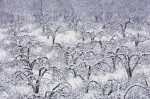 snow1 300x198 snow1