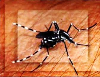 Mosquito Asiático em Nova Jersey