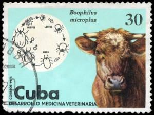cow 300x225 cow.jpg