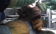 Brasil passará ser o centro da caça, tortura aos animais e exploração da madeira  do mundo