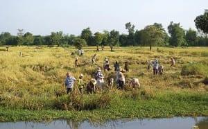 Battambang Provinz 01 300x186 Battambang Provinz 01