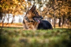 2dog2 300x200 Realidade  cotidiana  para os guardiães de cachorros
