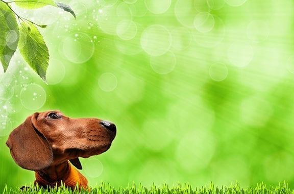 Realidade  cotidiana  para os guardiães de cachorros