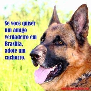 amigorealtrue 300x300 Amigo em Brasília