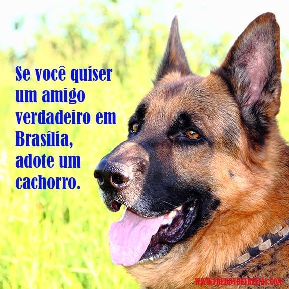 Amigo em Brasília