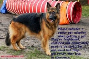 olddog1 300x200 Adopte um animal idoso