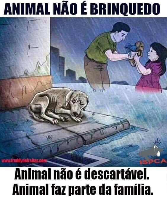 animaladotado Animal não é brinquedo