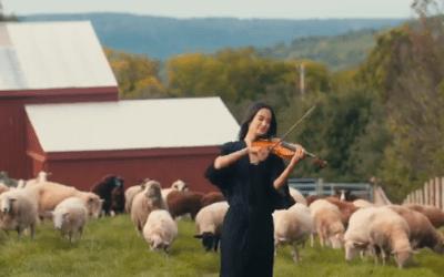 Música clássica para os animais