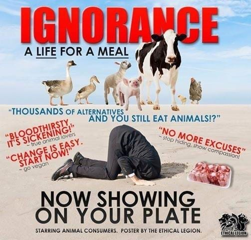 Reflexões sobre a ignorância do ser humano