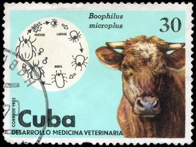 38 brasilienses morreram de encefalopatia espongiforme bovina em 2013