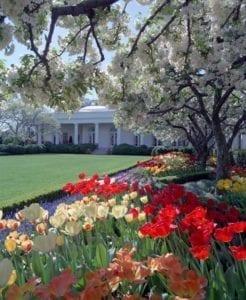 Rosengarten des Weißen Hauses 246x300 Rosengarten des Weißen Hauses