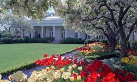 Melania Trump vai renovar o  Rose Garden